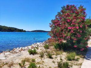 Island Molat , village Brgulje